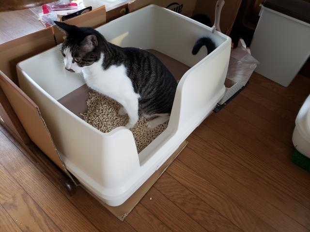 猫の尿に異常がある