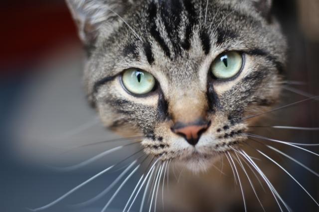 猫の目が赤い