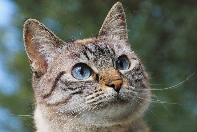 cat-dislike