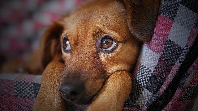 犬が下痢をした