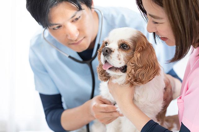 犬の健康診断の適切な時期は?